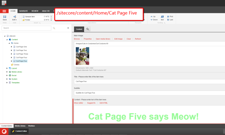cat-page-five-sitecore