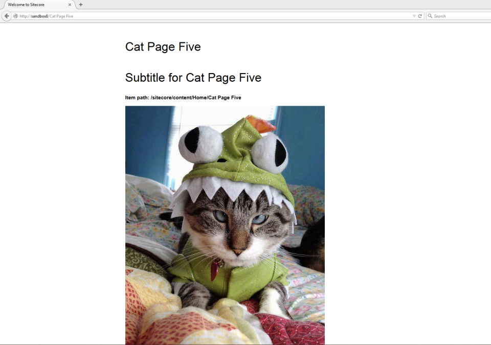 cat-page-five